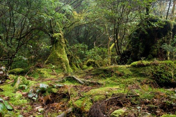 Forest in Yakushima 51 635 423
