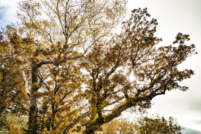 Panorama Line With Autumn Leaves