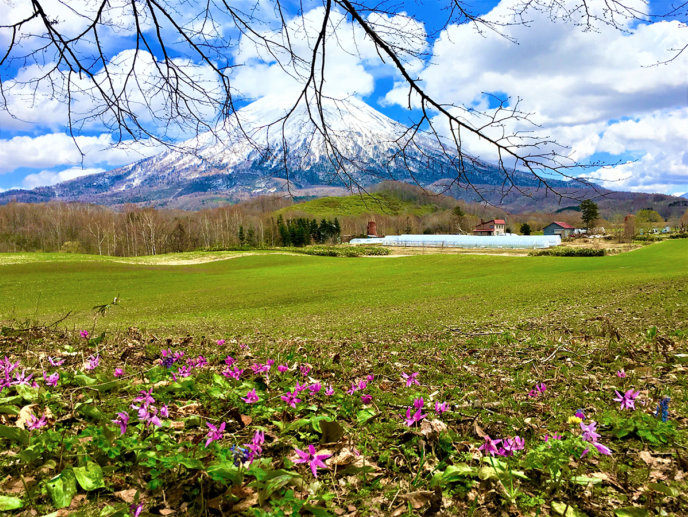 Beautiful Scenery Of Niseko Spring 2017 1