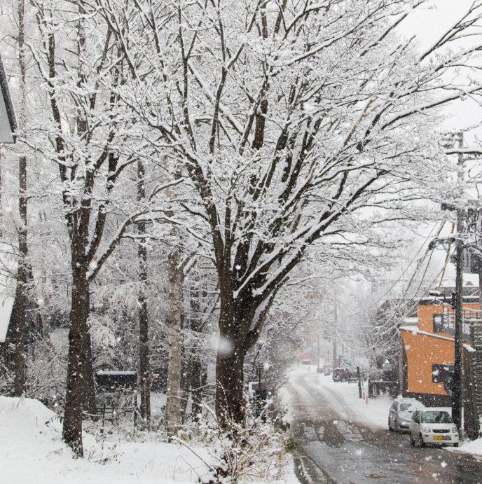 Winter Snow 11