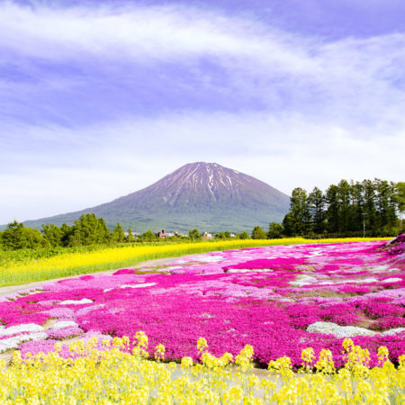 What's On in May in Niseko