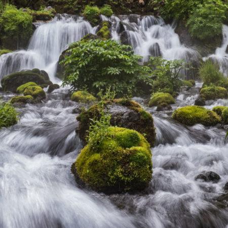 The Beauty of Fukidashi Park
