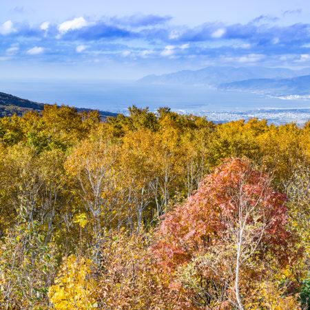 黄金色に染まる秋