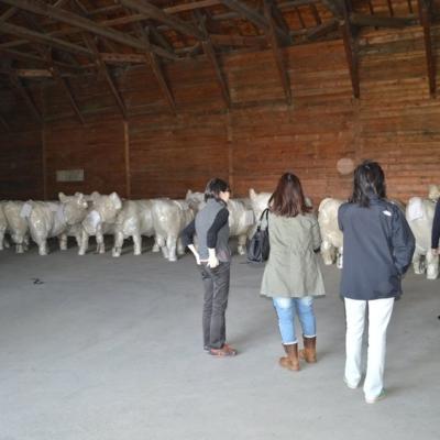Cows arrive in Niseko for Cow Parade Niseko