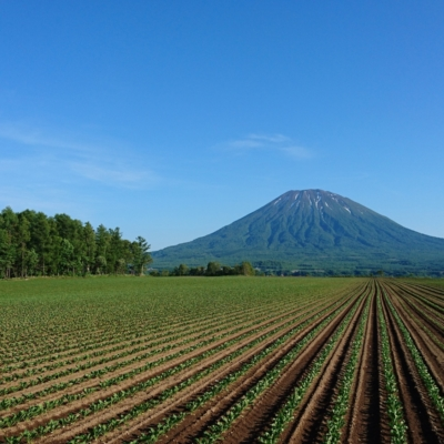 Summer Lines Lines In Farmers Fields Farming Mt Yotei Background