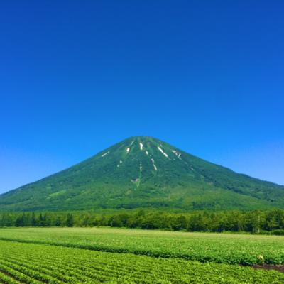 Summer in Niseko, endless green
