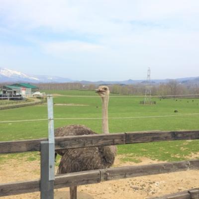 Niseko Ostrich Farm 1