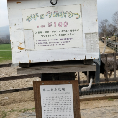 Ostrich Farm 4