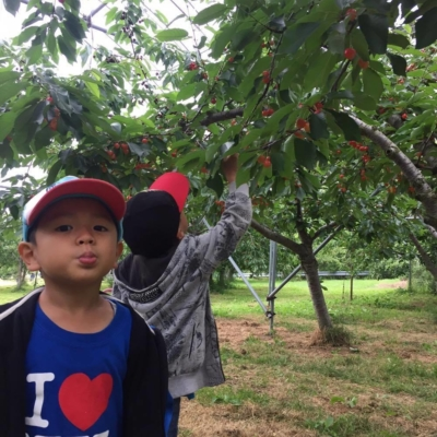 Yukos Boys Picking Cherries In Niki Town