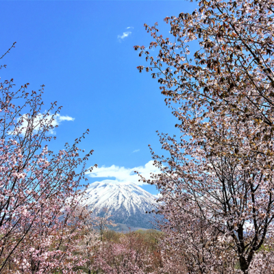 Beautiful Scenery Of Niseko Spring 2017 7