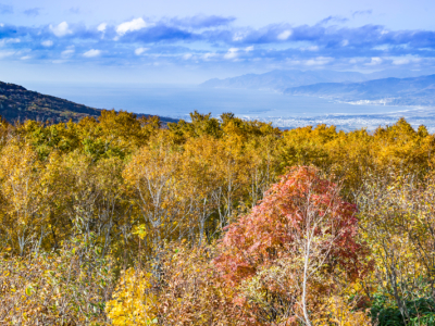 Panorama Line With Autumn Trees