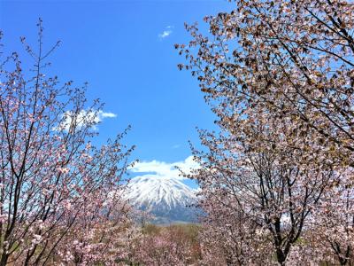Beautiful Scenery Of Niseko Spring 2017 7