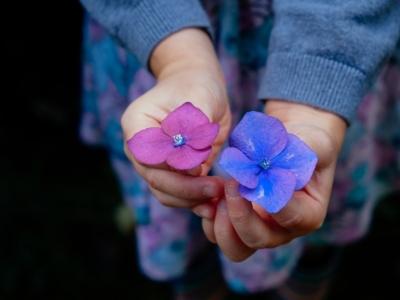 Flowers 945450 1920