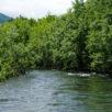 Shiribetsu River 1